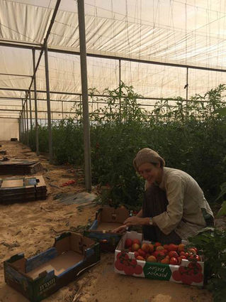Israel's new pioneers work to transform the Negev desert